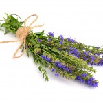Hyssop Oil at Tree of Life Journeys, Reconnect with Yourself - Meditation, Law of Attraction, Spiritual Products