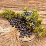 Juniper Oil at Tree of Life Journeys, Reconnect with Yourself - Meditation, Law of Attraction, Spiritual Products