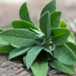 Sage Oil at Tree of Life Journeys, Reconnect with Yourself - Meditation, Law of Attraction, Spiritual Products